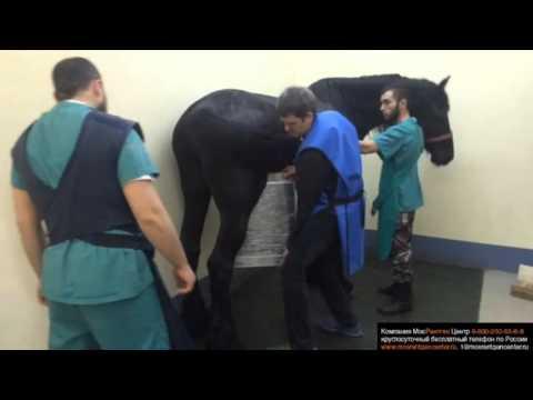 Клиники в москве лечения позвоночника