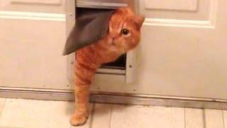 Толстый кот - забавный кот против дверей. Компиляция | Новое, HD