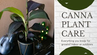 Canna Lily Complete Care Guide To Grow Indoors / Outdoors (For Beginners)