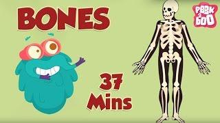 Best Learning Videos For Kids   The Dr.Binocs Show   Fun Learning Videos For Kids   By Peekaboo Kids