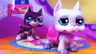 Littlest Pet Shop: Forever (díl #1: Bella je těhotná)