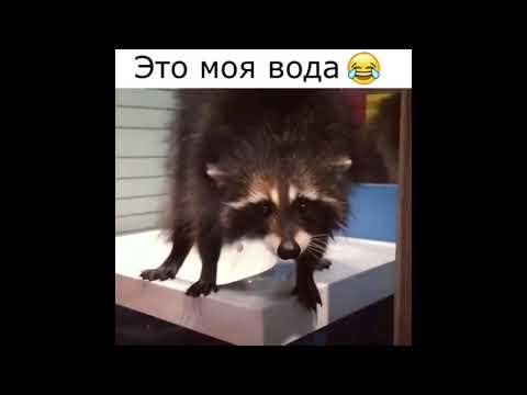 Это просто ШОК! В Алматы енот забрался в чужой дом и помыл посуду😀