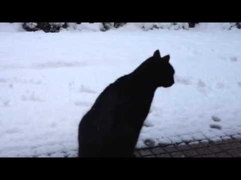 Il gatto timoroso della neve