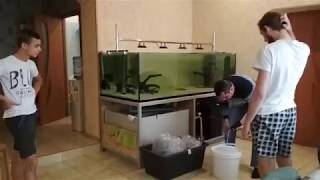 Новый аквариум 1200 литров, новые впечатления, новые рыбки