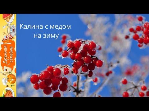 Калина с медом /Лекарство от семи недугов/viburnum honey