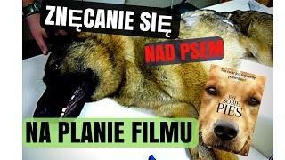 Był sobie pies (A Dog's Purpose) - Znęcanie się nad psami na planie filmu!