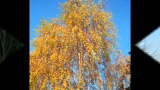 preview picture of video 'Paszab parkja ősszel'
