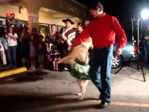 Hund tanzt mit Herrchen