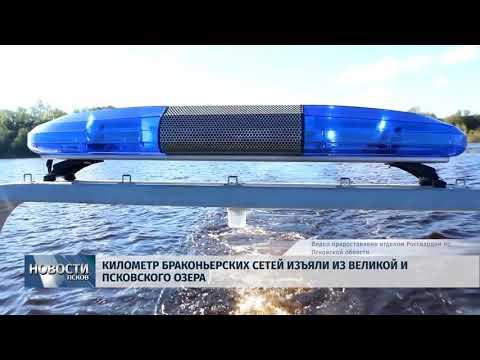 Новости Псков 17.05.2018 # Километр браконьерских сетей изъяли из Великой и Псковского озера