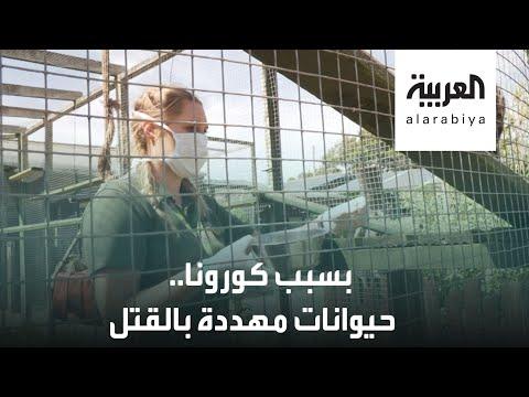 العرب اليوم - شاهد: حيوانات مهددة بالقتل في حديقة بورث في بريطانيا