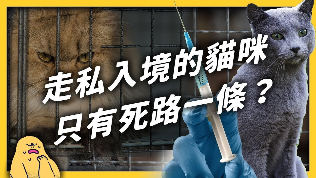 154隻全被安樂死!走私品種貓為何不開放領養?「依法撲殺」真的合法嗎?|志祺七七