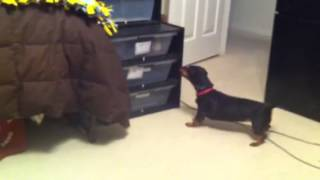 Dog Barking at the Feeders