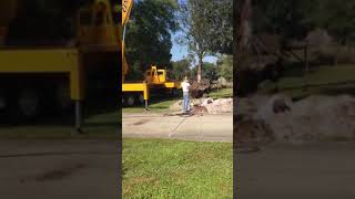 30′ Live Oaks Being Planted and Guaranteed