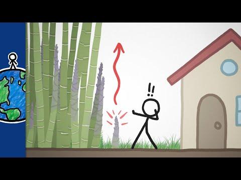 Nejrychleji rostoucí rostlina na světě - MinuteEarth