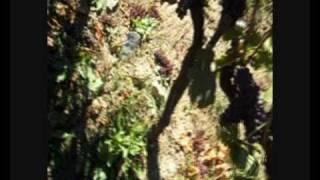 preview picture of video 'Selezione dei grappoli'