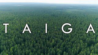 Taiga - Biomes#7