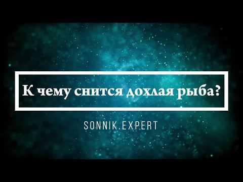 К чему снится дохлая рыба - Онлайн Сонник Эксперт