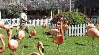 Ardastra Gardens, Zoo and Conservation Centre, Nassau