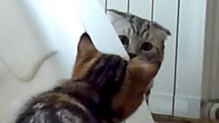 Funny Cats spy thriller. Mission Impossible