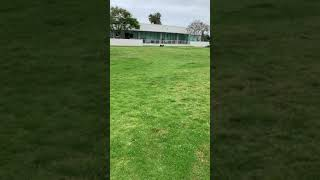 Australian Cattle Dog Puppies Videos