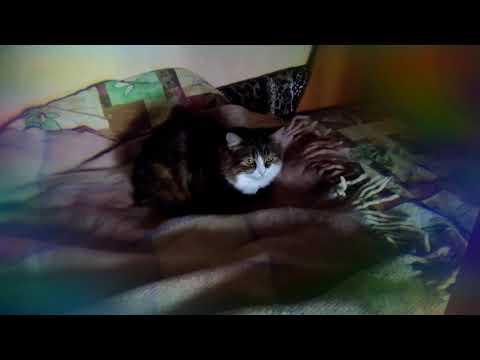 Почему кошки писают на кровать хозяина?🤔 [снято 1 марта 2018]