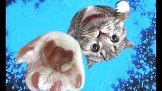 Смешные Kошки и Милые Котята 2019 ♥ Cat Marabacha #40