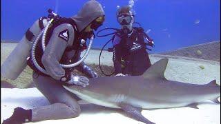 SHARK ENCOUNTER - KILLER OR MISUNDERSTOOD?