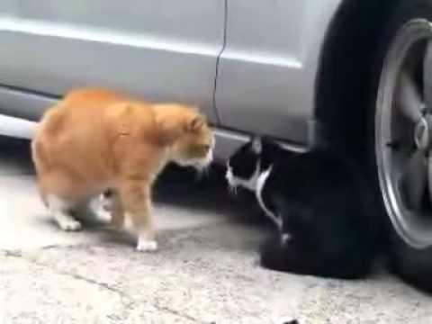 Η κερατωμένη γάτα