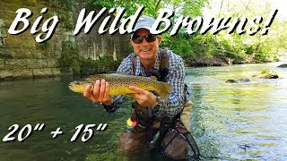 WBD - Fly Fishing Pennsylvania Big Wild Browns