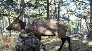 BULL ELK ALMOST HITS ARCHER!! BODY BRUSHES AGAINST ARROW!!