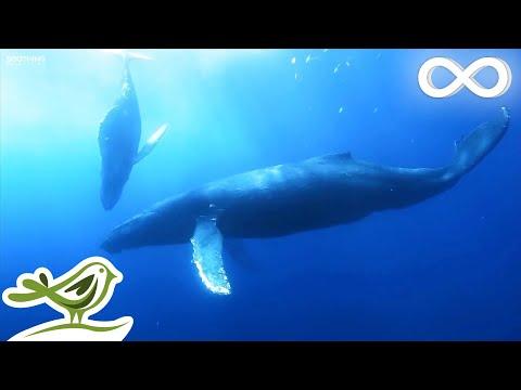 Vidéos - Images sous-marines et musique relaxante