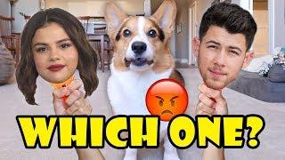 Why Does My CORGI Dislike Selena Gomez & Nick Jonas? || Life After College: Ep. 634