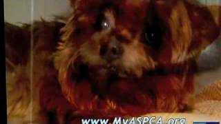 sarah mclachlan humane society commercial song free online videos
