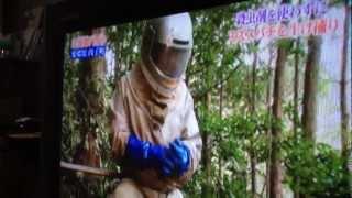 Suzumebachi Hunters on Japanese TV