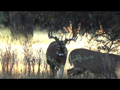 2019 The Choice – Show 3 – MT Whitetails w/Deep In The Bush Adventures