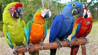 8 Most Beautiful Macaws On Planet  Earth