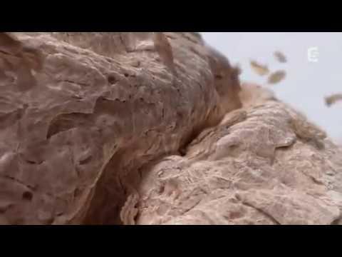 La chélidoine la poudre sèche au microorganisme végétal des ongles