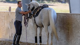 """Step ONE: """"Teaching Your Horse Piaffe In Hand"""" // Horse Training Tips With Deanna Corby Dressage"""