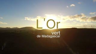 Projet de Ravintsara à Madagascar