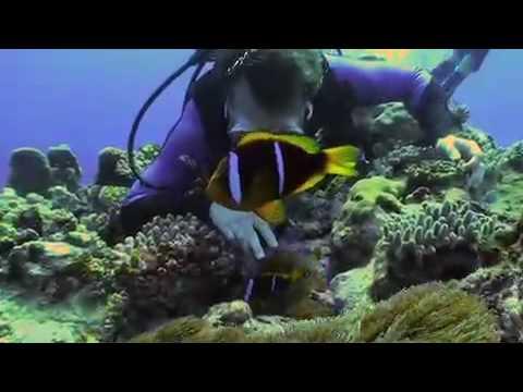 Tonga, Insel Euà,Tonga
