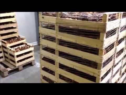 Come trattare consigli di fungo di unghia