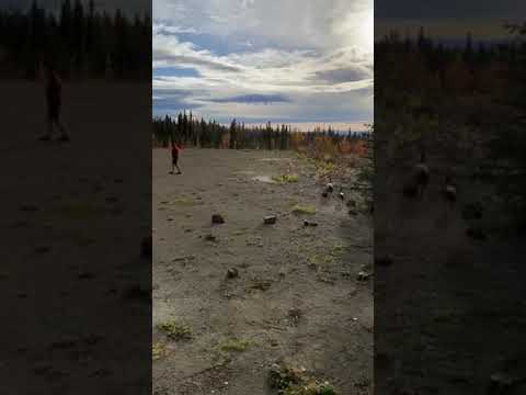 Video Of Five Mile Campground, AK