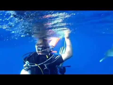 Shark Attack - Hai Angriff, Rocky Island,Ägypten