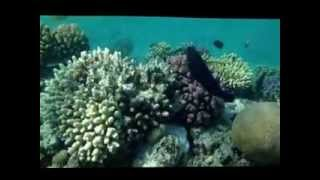 preview picture of video 'Fort Arabesque-Makady Bay, Safaga, Red Sea-Egypt'