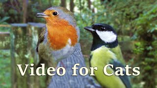 Videos for Cats : Birds Chirping at The Forest Gate - 8 HOURS