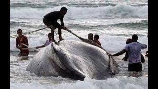 unexpected Biggest Sea Creatures Caught