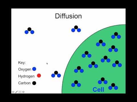 Apologia Biology Module 5 Exploring Creation Diffusion ...