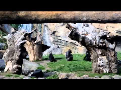Bioparc Valencia | Tiergehege mit afrikanischen Tieren