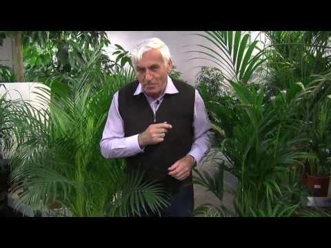 VOL.AT-Gartentipp: Immergrüne Pflanzen
