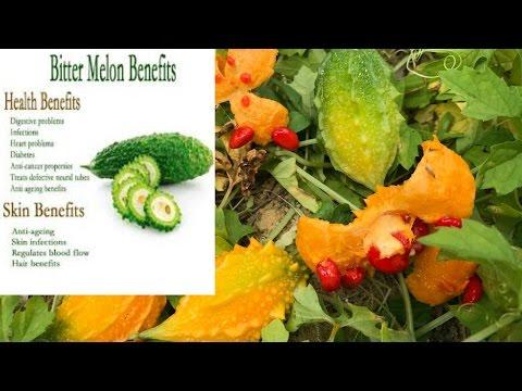 Video 山苦瓜的功效. momordica charantia benefits .Peria katak.